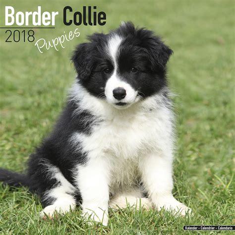 collie puppies border collie puppies calendar 2018 pet prints inc