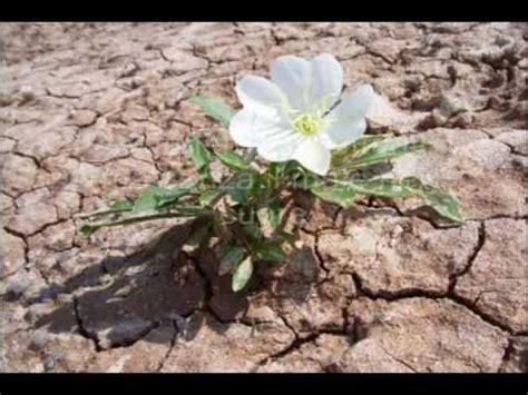 fiori deserto fernando reis fiore deserto