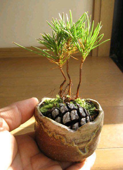 diy pine cone bonsai     pine cone bonsai