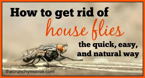 get rid of house flies termite control