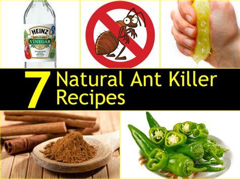 Ant Deterrent In Kitchen by 7 Ant Killer Recipes Handy Diy