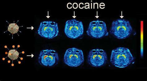 cocaine vaccine stops cocaine   tracks national institute  drug abuse nida