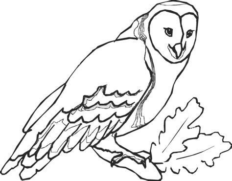 Pictures Of Owls To Color barn owl to color