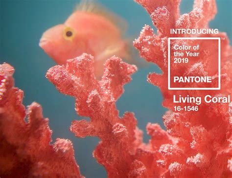 color of coral living coral color of the year for 2019 south home