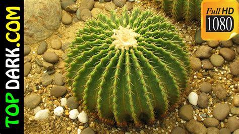 imagenes de animales y plantas del desierto 10 plantas mas raras y misteriosas del desierto youtube
