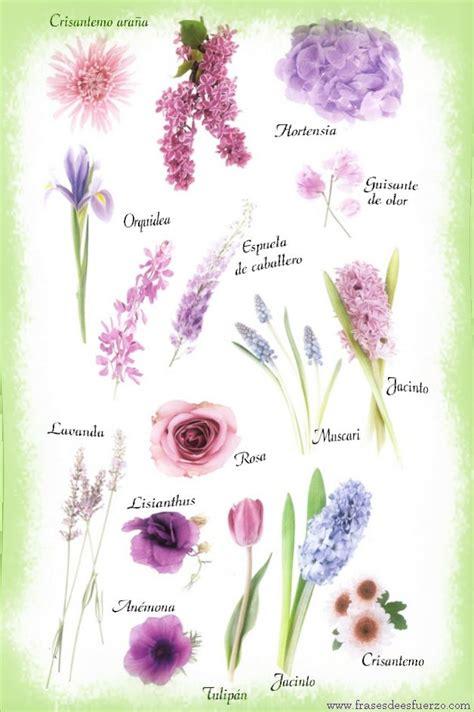 imagenes flores y nombres los nombres de flores con im 225 genes en collage