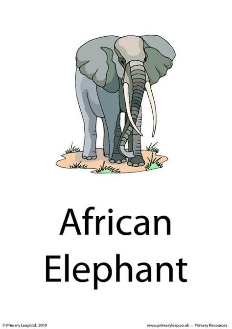 The Elephant Poem Worksheet Answers by Elephant Flashcard Primaryleap Co Uk