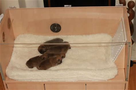 puppy incubator services puppy incubators