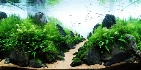 Award Winning Aquascapes Legendary Aquarist Takashi Amano Aquarium Architecture