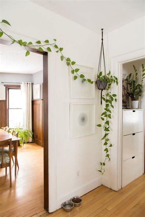 Plante Design D Interieur by Voici Les Plus Belles Plantes D Int 233 Rieur Pour Donner De
