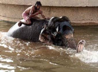 ver imagenes sorprendentes de animales animales variados en pakistan pakistan por descubrir