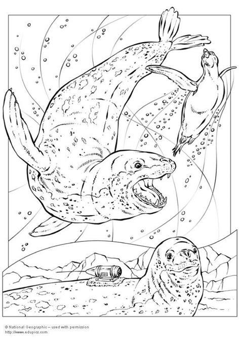 Dibujo para colorear Foca leopardo - Img 5743