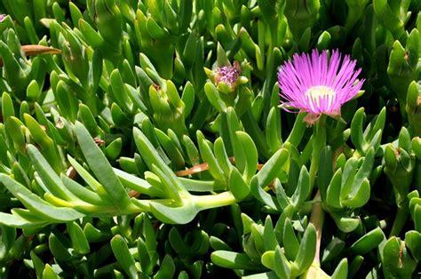 nomi piante da giardino nomi piante grasse piante grasse come si chiamano le