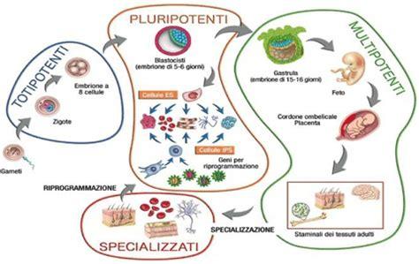 banche cellule staminali conservazione delle cellule staminali cordone