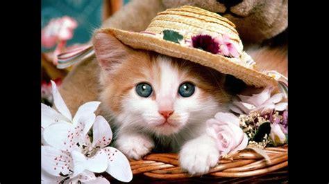miyav miyav seni yaramaz kedi cocuk sarkisi dinle youtube