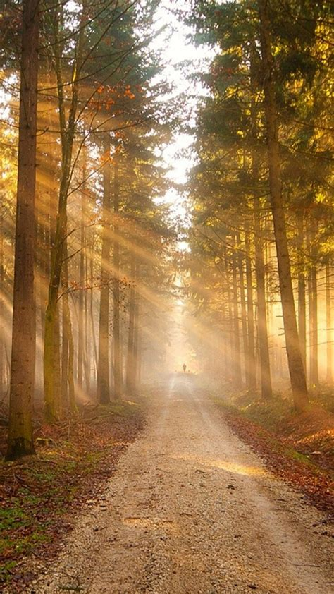 nature sunshine grove forest path iphone  wallpapers