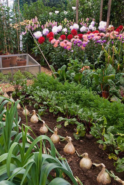 vegetable flower garden plant flower stock