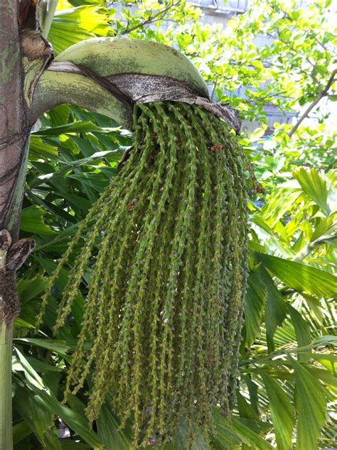 unusual houseplants unusual tropical plant http www hotmix106 com unusual