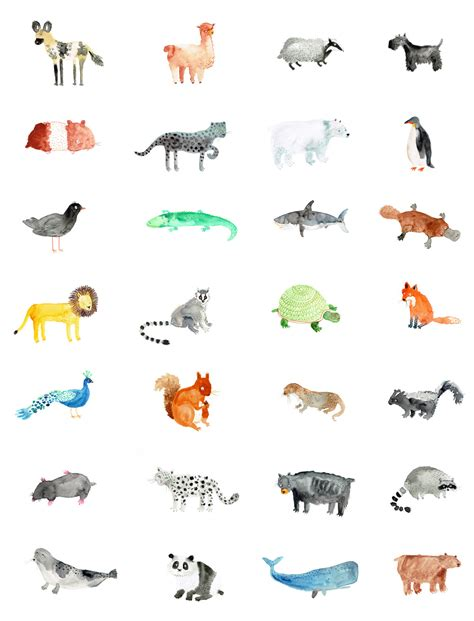 A day of animal drawings   Lorna Scobie Illustration