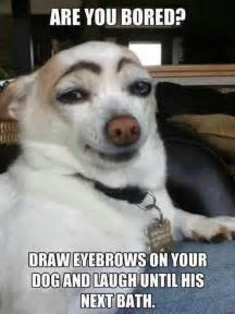Blind Guys Tucson Funny Dog Memes The Ultimate Collection Dog Training