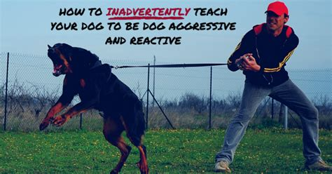 how to your to be aggressive on command thedogtrainingsecret