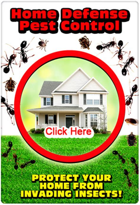 annual home protection plan home protection plan pests right lawn care america s lawn specialists call today