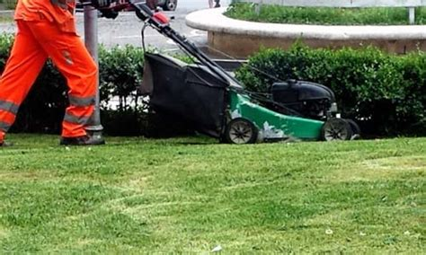 corso per giardiniere un corso da giardiniere riservato ai disoccupati la