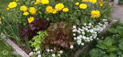 gardening guides gardening guides
