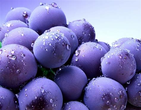 what color are blueberries blue blueberry colors photo 34682997 fanpop