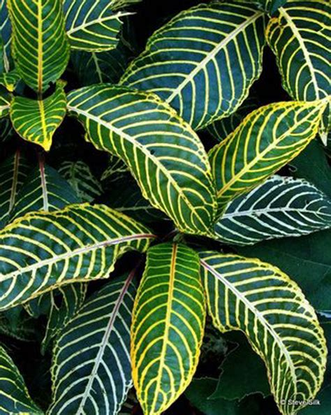 tropical plant rentals tropical plant rentals