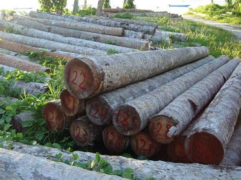 Sodet Kayu No 1 Ozone peluang bisnis usaha jualan kayu kelapa