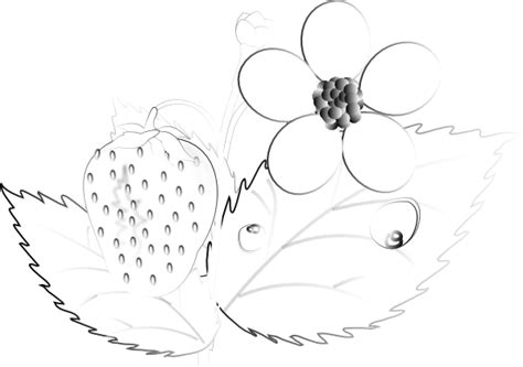 Strawberry Outline Drawing by The Gallery For Gt Strawberry Clipart Png