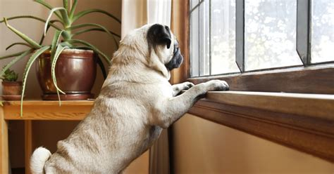 dogs separation anxiety dealing with separation anxiety in dogs tips and tricks from a top trainer the