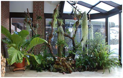 Große Pflanzen Für Innen by Pflanzen Exoten Rarit 228 Ten