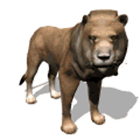 imagenes de leones gif imagenes animadas de leones gifs animados de animales