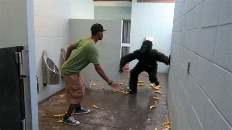 prank in bathroom gorilla in public bathroom prank viral viral videos