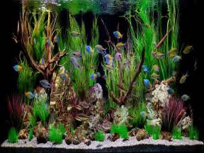fish aquarium decorations on aquarium