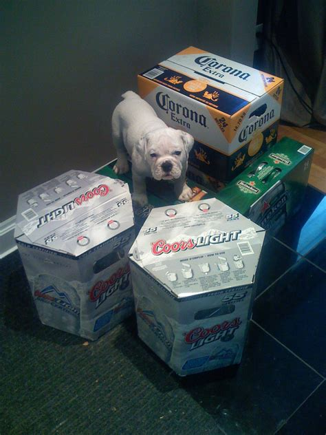coors light costco price finally coors light 55 packs now available this is from