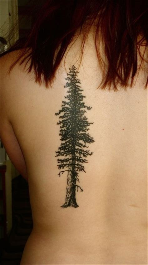 spruce tree tattoo spruce tree on back tattooimages biz