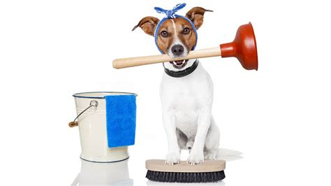 is a dogs clean cleans his house while owner is at work