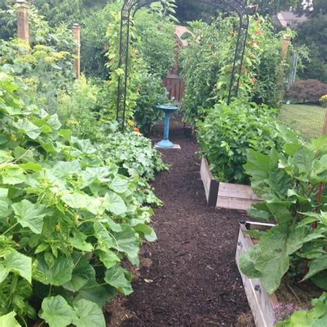 Summer Vegetable Garden by Summer Vegetable Garden Update Tomato Envy Tomato Envy