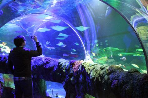 Aquarium Giveaway - mom among chaos sea life michigan aquarium grand opening giveaway