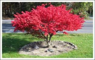 best backyard trees 193 rvores pequenas fotos e imagens jardim decorado