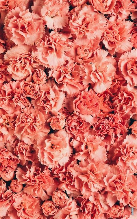 New Rosita Magenta coral quenalbertini coral flowers coral a button mantels and flower