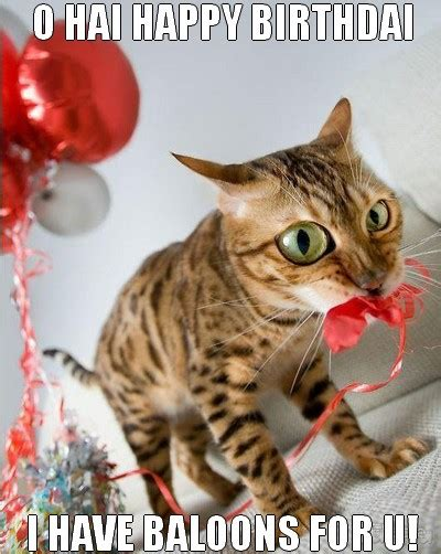 Funniest Happy Birthday Wishes On Funny Cat Happy Birthday Wishes Image Picsmine