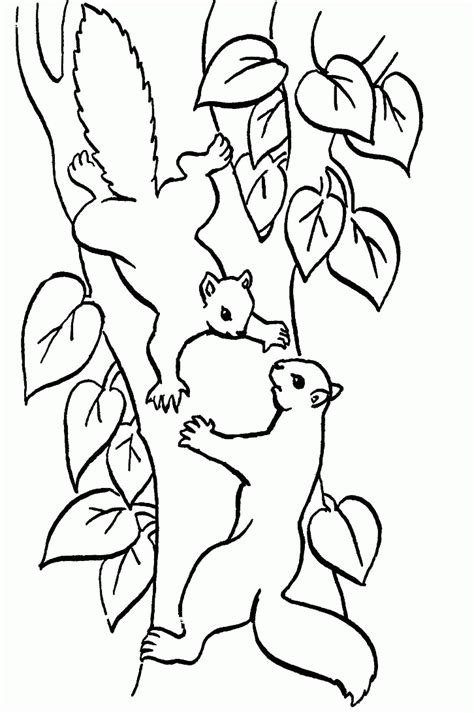 coloring book pages from pictures squirrel coloring pages coloringpages1001
