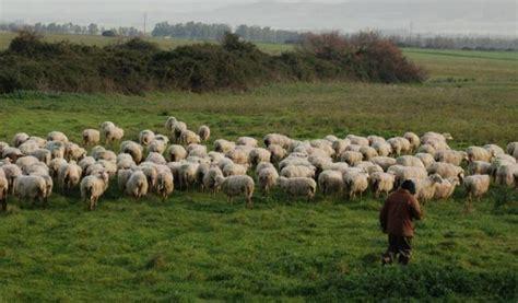 banca nazionale lavoro cagliari quot i pastori sardi rischiano di perdere fondi europei per