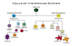 Pics photos diagram and parts of immune system