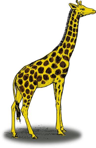 giraffe clip giraffe clip at clker vector clip