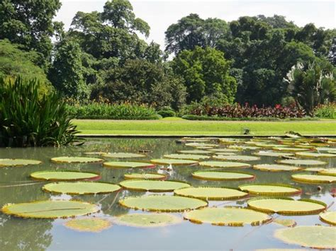 Bogor Botanical Garden Pools With Water Lilies Picture Of Bogor Botanical Gardens Bogor Tripadvisor